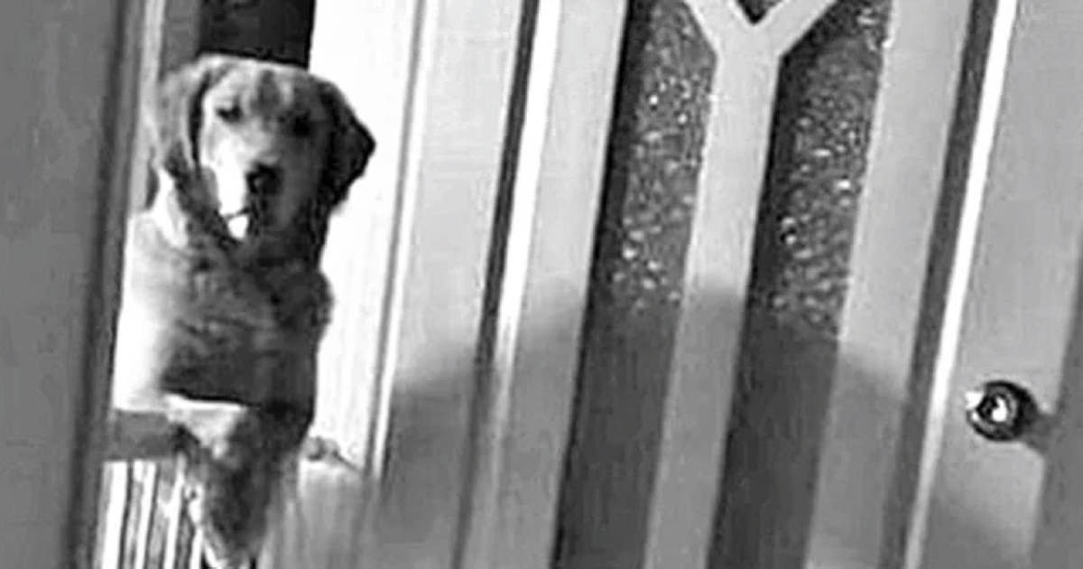 They discover their dog doesn't sleep at night and just watches them. The  reason why is scary