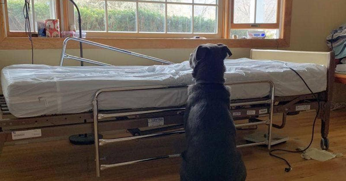 Heartbroken dog adopted after photo shows him waiting by dead owner's bedside