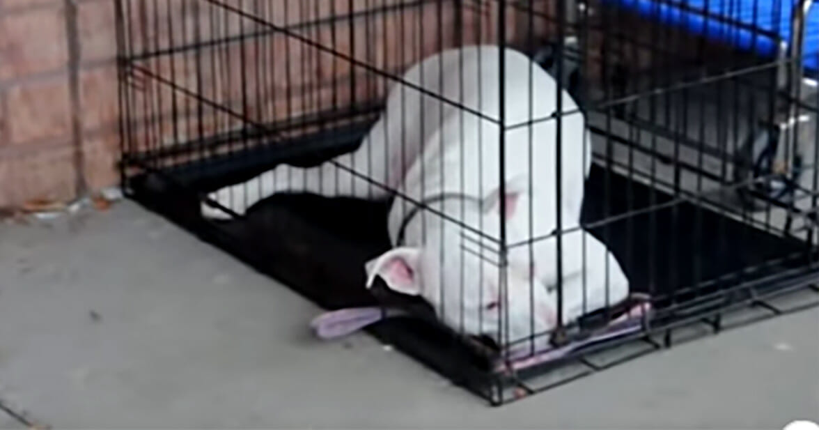 Deaf Dog Is Surprised By Her Army Dad Returning Home From