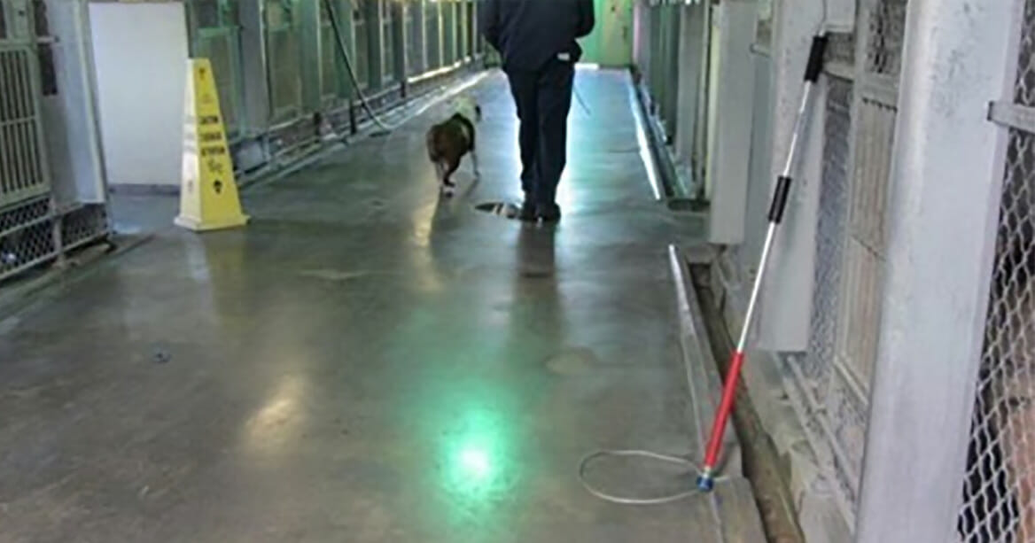 The heartbreaking image of a shelter dog on her last walk captured by a woman who never wants to forget
