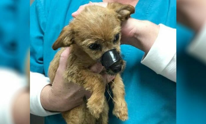 Dog thrown from a bridge with mouth taped shut thanks the man who saved him