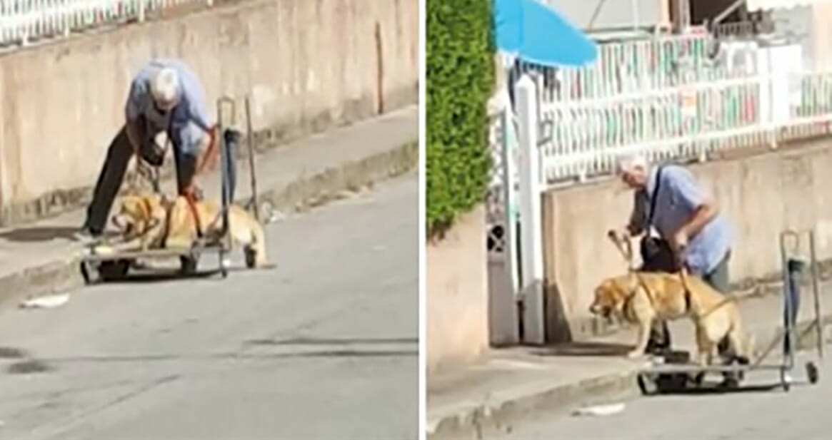 Man captured on camera taking sick dog for a walk every day is praised by thousands