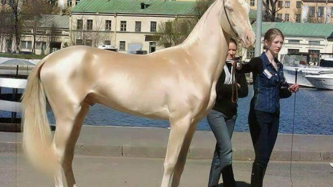 Golden Animal This Horse Is Called The World S Most Beautiful