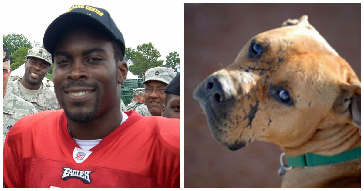 Thousands object to NFL honoring Michael Vick over his dogfighting past—including the guardian of one victim