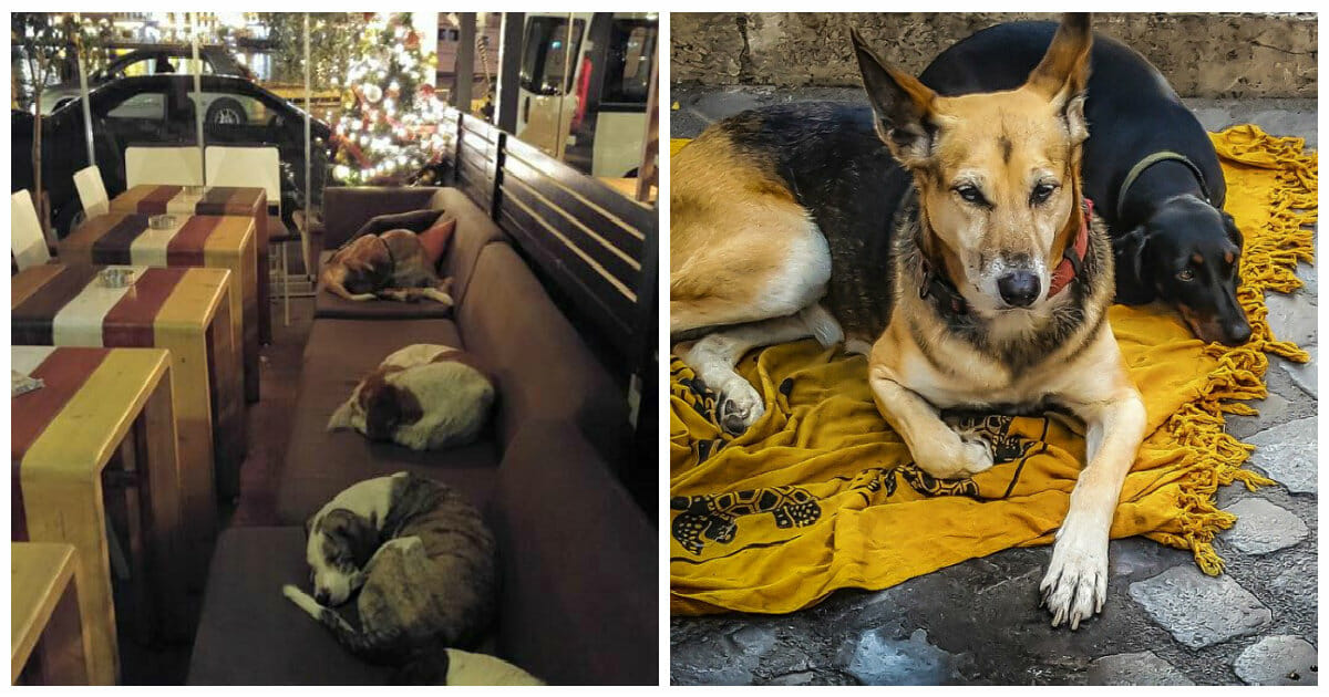 Cafe turns into a shelter for stray dogs every night after closing