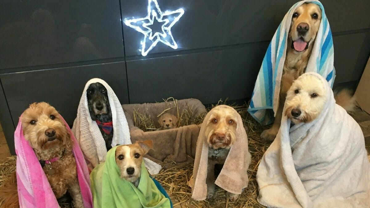Dogs get together to pose for Christmas' cutest Nativity scene