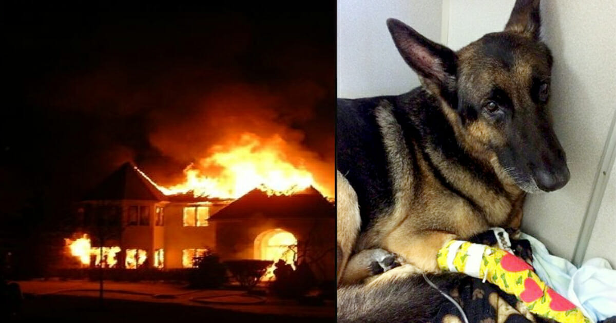 Retired police dog jumps back into duty and saves toddlers from raging house fire