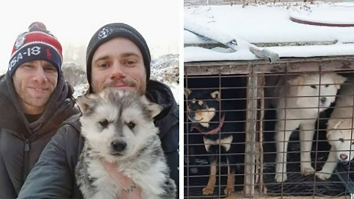 Olympic skier rescues 90 dogs from South Korean meat farms and helps shut one down