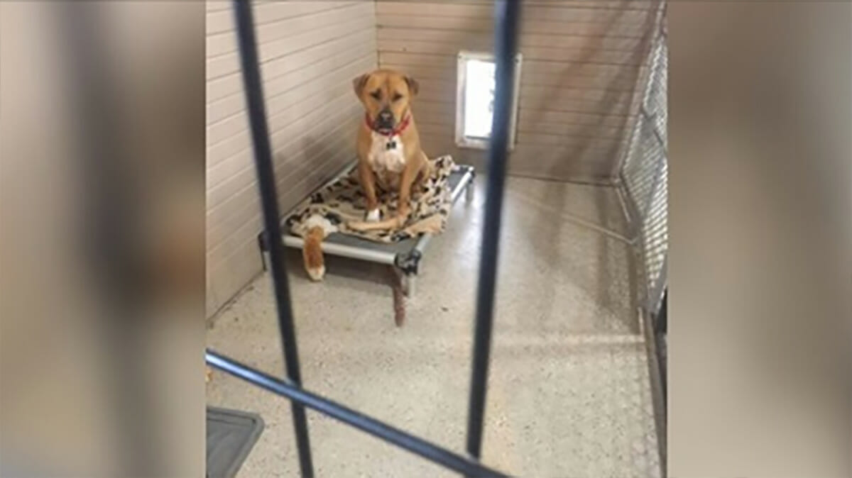 Image result for Shelter dog depressed after being passed up for adoption for 3 years