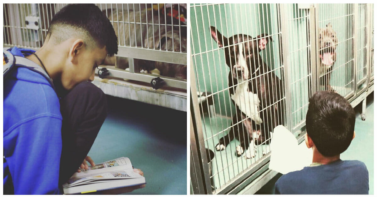 Image result for 10-year-old boy spends his free time comforting shelter dogs by reading to them