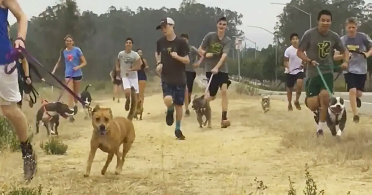 High school running team brings lonely shelter dogs on their morning runs – this is brilliant