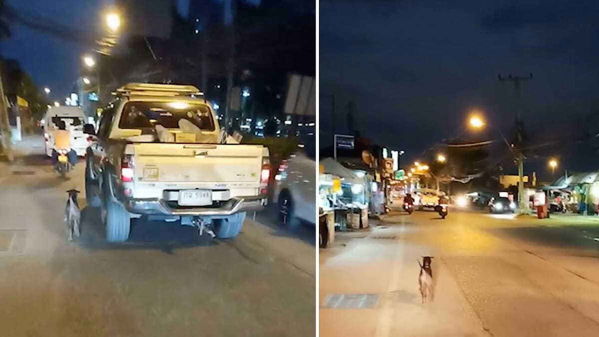 Heartbreaking moment as abandoned dog runs after owner's truck until his legs are sore