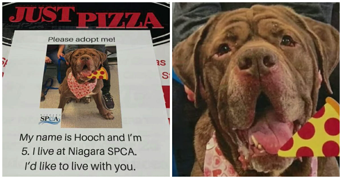 Pizza place puts local shelter pets on their boxes to help them get adopted