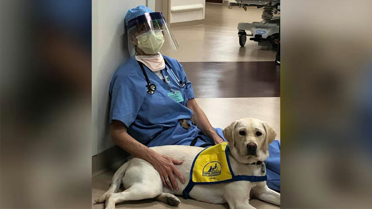 Therapy dog provides much-needed mental break for exhausted health workers on the frontline