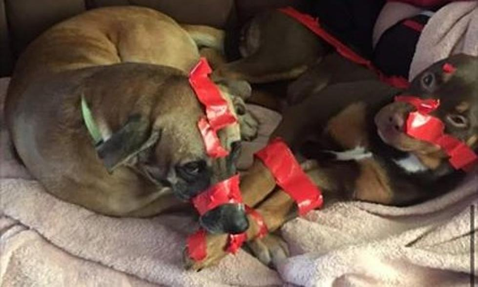 Police respond after man tapes up his dogs and posts about it on Facebook