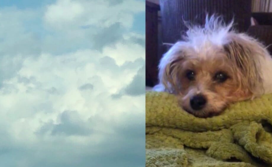 Grieving woman sees her dog's face in the clouds hours after he ...