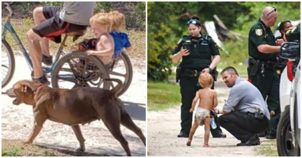 Missing 3-year-old with autism found safe with loyal dogs who ...