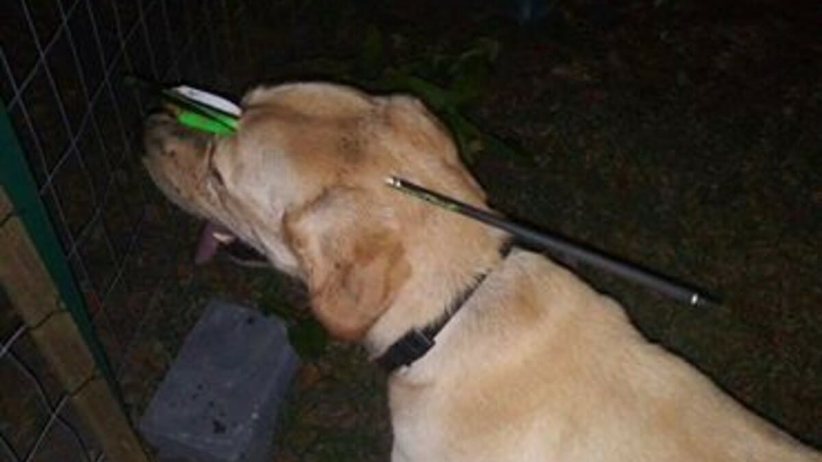 Dog was found with 16-inch arrow through head after getting shot with crossbow