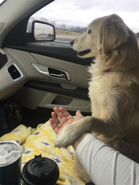 Grateful dog holds his foster mom's during 'freedom ride' away ...
