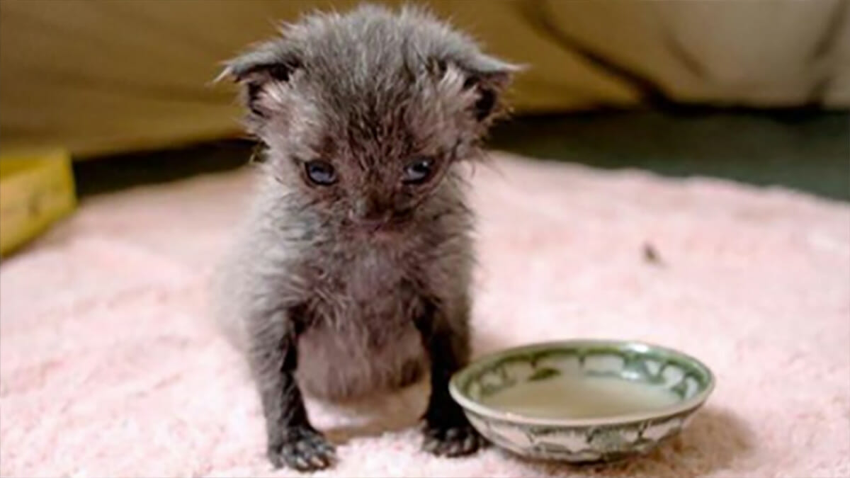 Kitten found crawling across the road with umbilical cord still attached