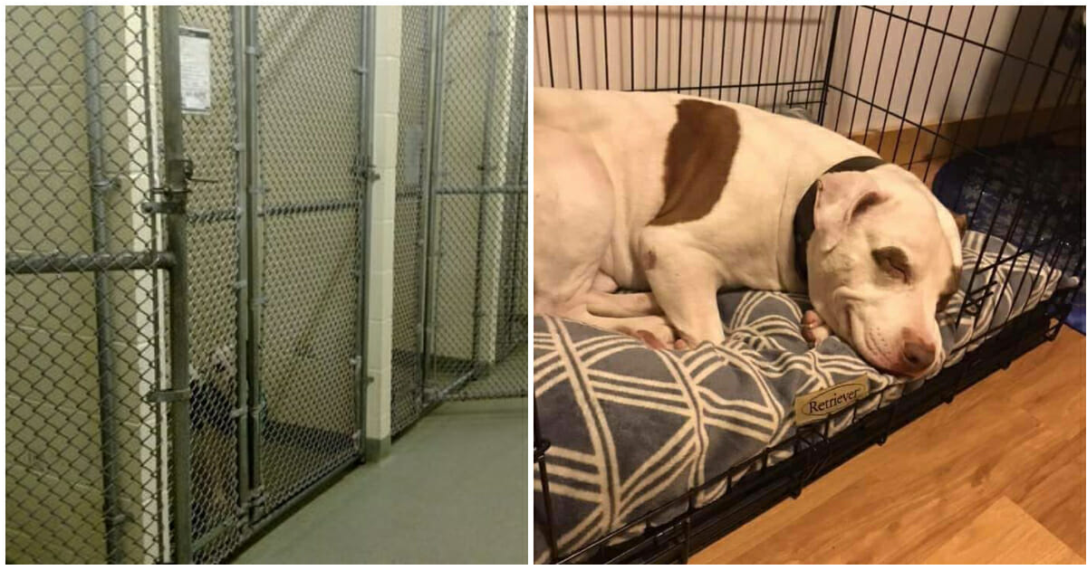 Last dog left in shelter finally gets adopted, smiles when he realizes he's  home